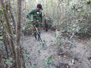 Searching for the metal pin inserted into ground to locate plot center using metal detector in the Sundarbans