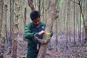 DBH measurement of trees in the Sundarbans